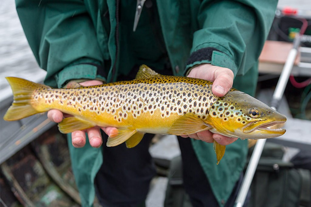 loch eye, brown trout, Inverness, fishing guide, Scotland,