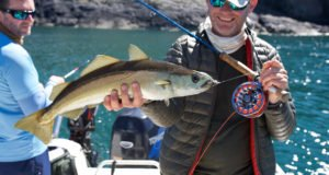 pollock, lure fishing, Shimano, Scotland, Sea Fishing, Guide, Orvis, Alba Game Fishing