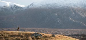 Royal Stag, Scotland, Scenery, Fishing touring holiday,