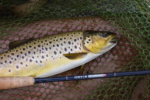 brown trout, Inverness, Orvis Helios, Alba Game Fishing, Hidden Gems, trout fishing Scotland