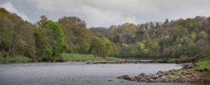 River Tay, Salmon Fishing, Fly Fishing, Spey Casting, Scone Palace, Best Beats, Tactics, Atlantic Salmon, Spin Casting,