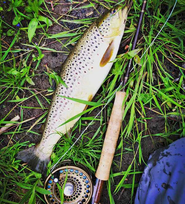 trout, whiteadder, dry fly, brown trout, Czech nymphing, Orvis