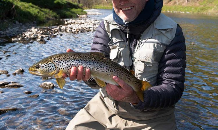 Brown trout, fly fishing, dry fly, River Teviot