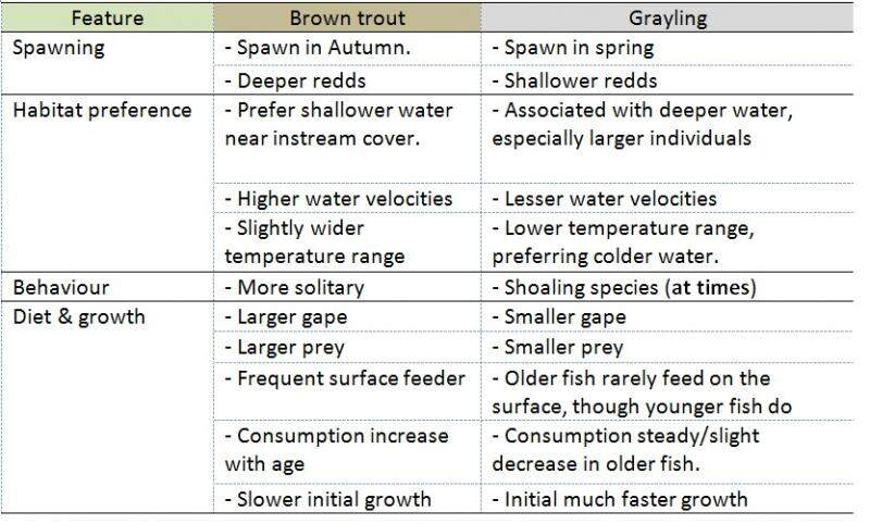 trout, grayling, spawning, feeding, techniques