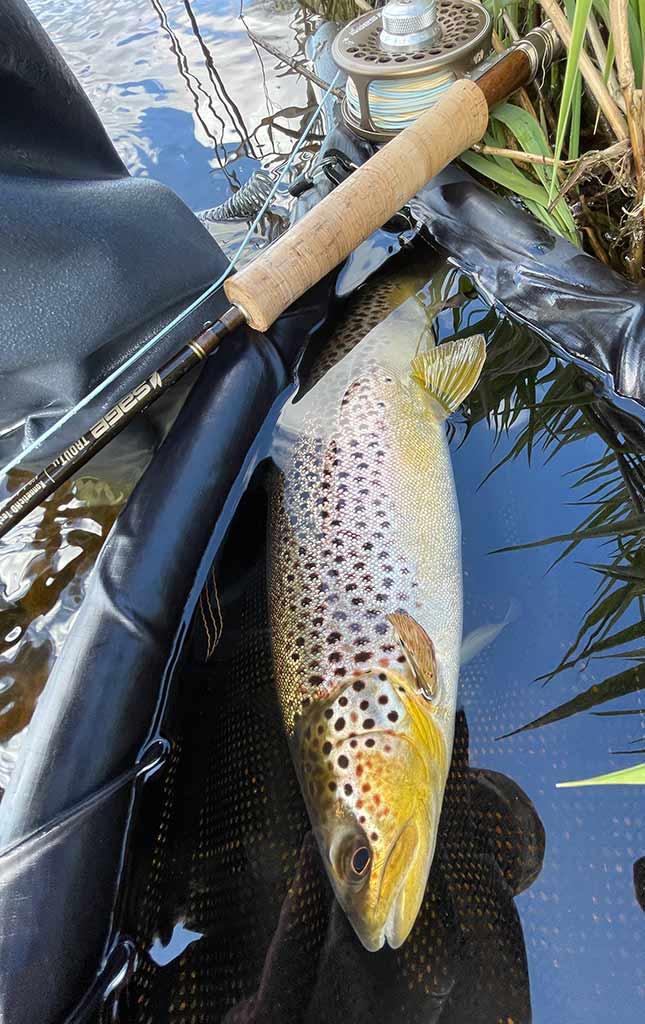brown trout, River Deveron, sage LL rod, best trout river, Scotland